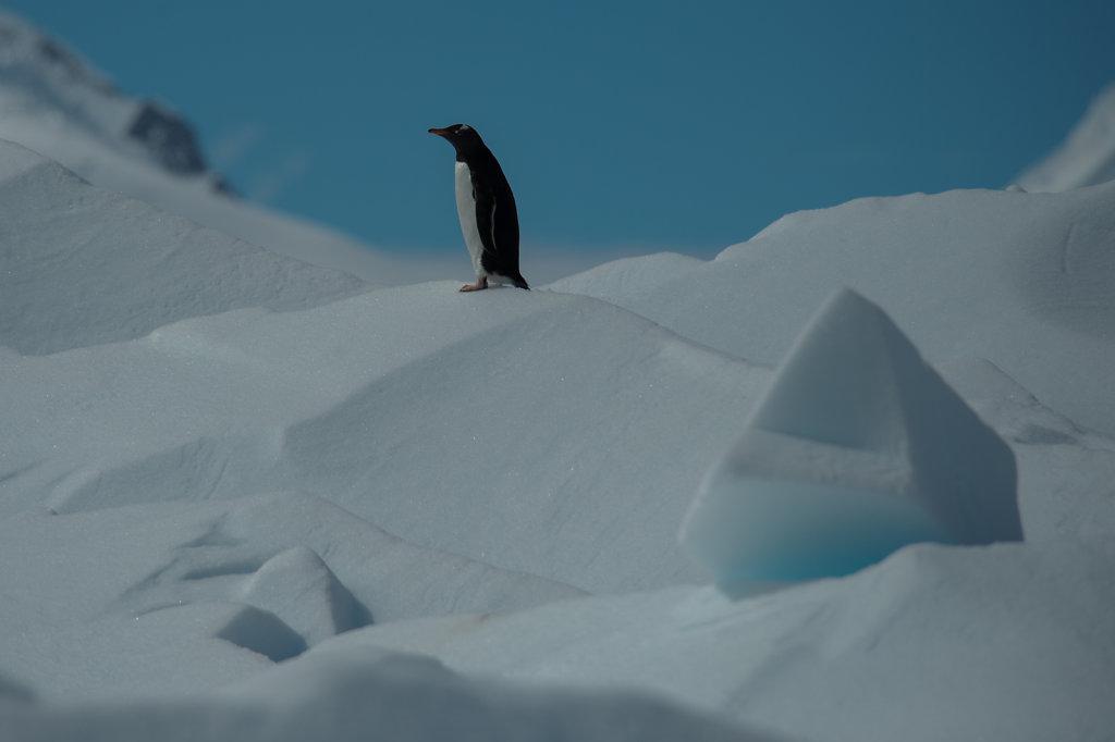 Antarctica55.jpg