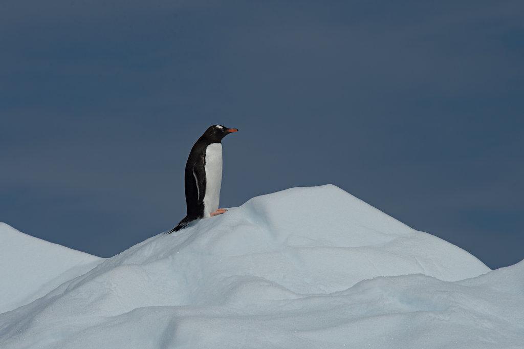 Antarctica57.jpg