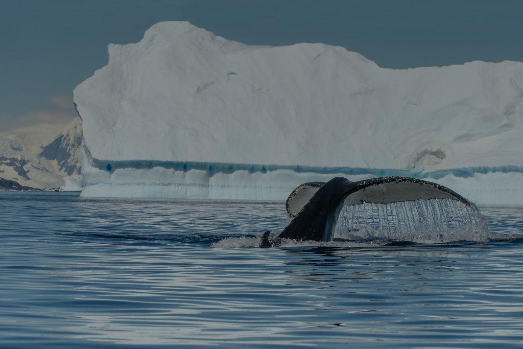 Antarctica05.jpg