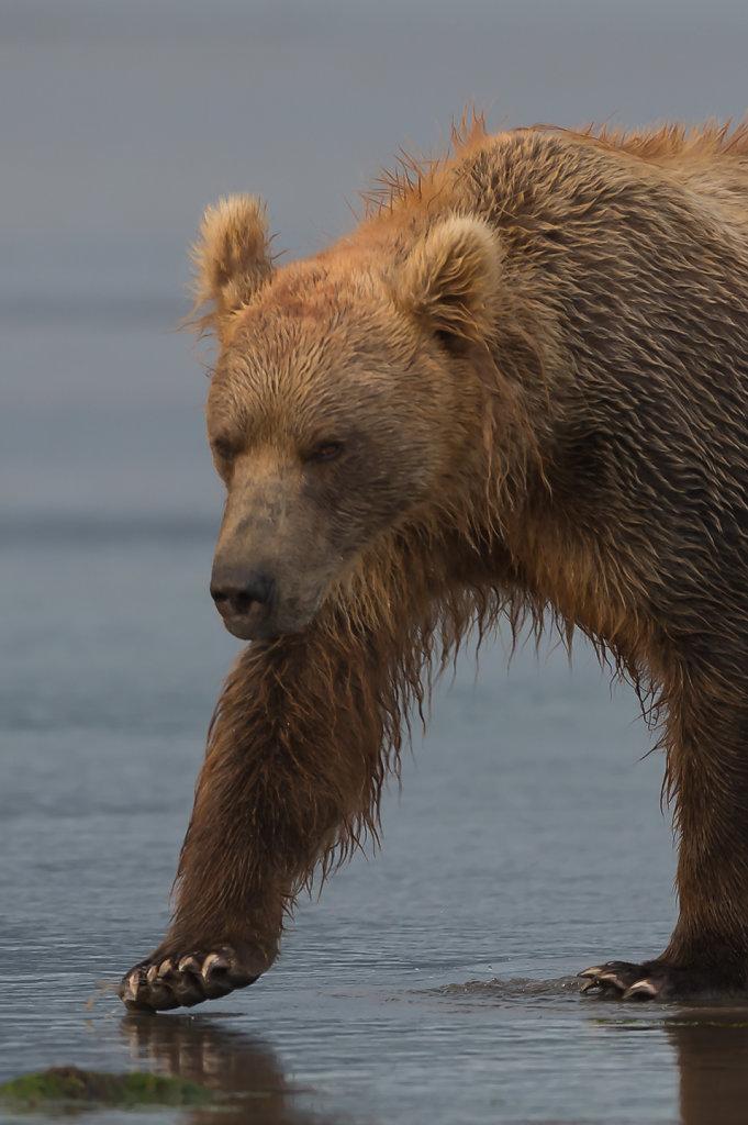 Alaska - Lake Clark NP