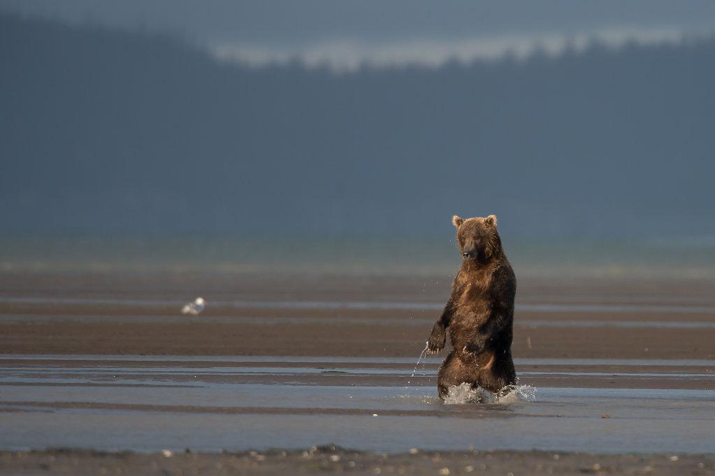 Alaska14-29.jpg
