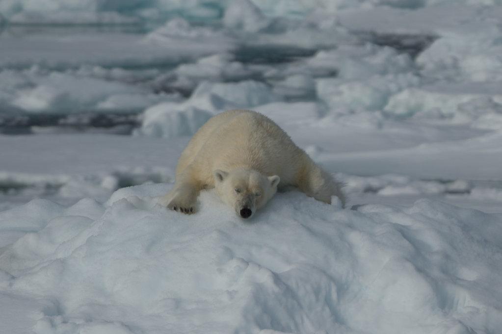 Spitsbergen 2014