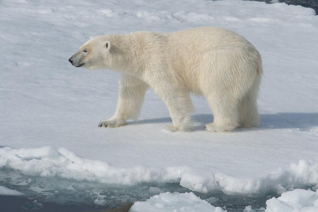 Spitsbergen14-20.jpg
