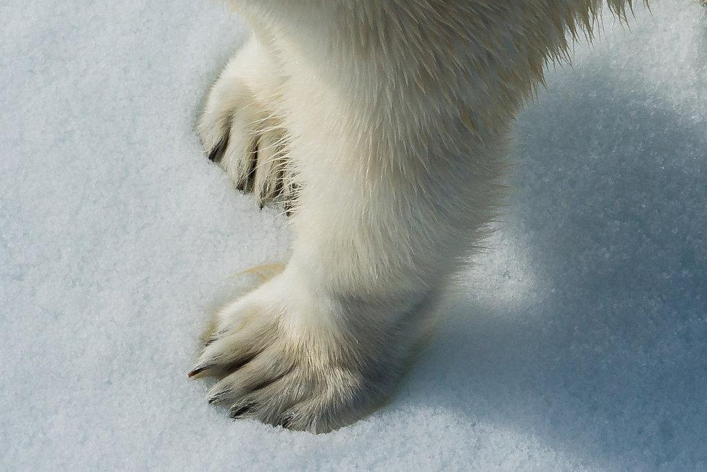 Spitsbergen14-25.jpg