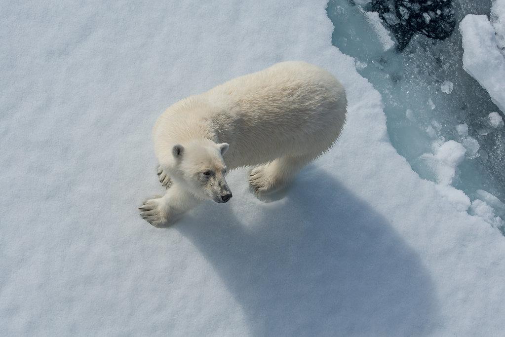 Spitsbergen14-27.jpg