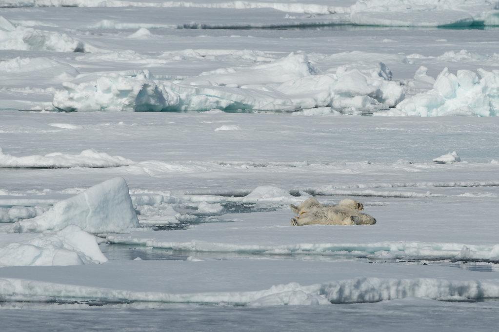 Spitsbergen14-34.jpg