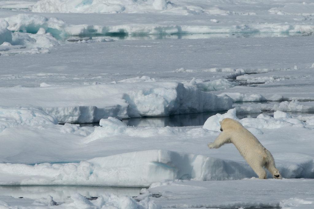 Spitsbergen14-35.jpg