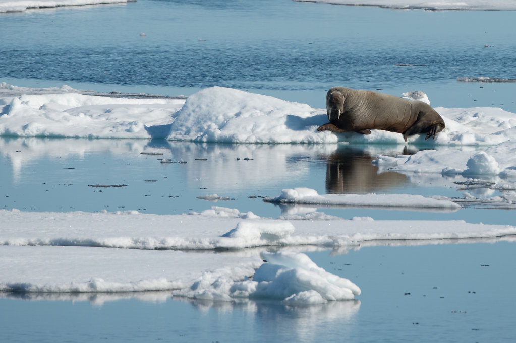 Spitsbergen14-43.jpg