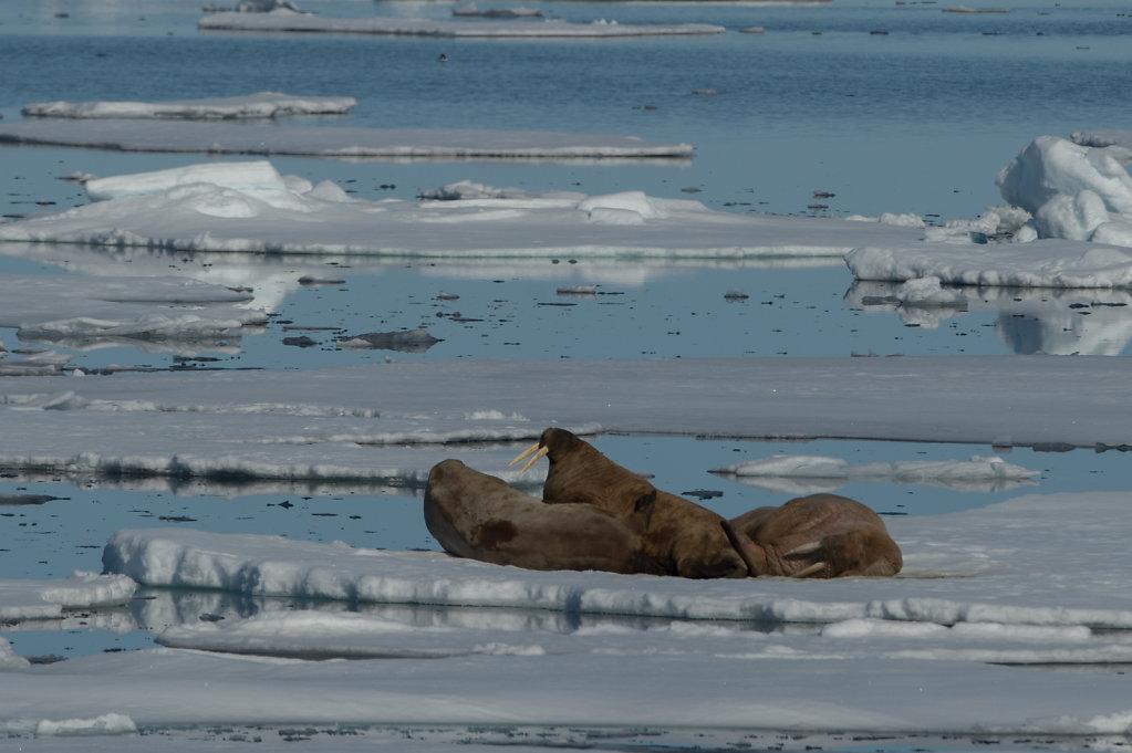 Spitsbergen14-44.jpg
