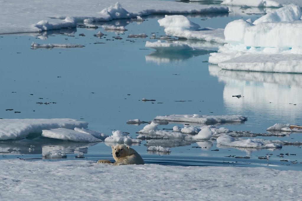 Spitsbergen14-46.jpg