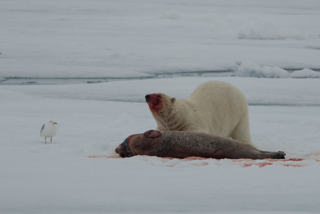 Spitsbergen14-61.jpg