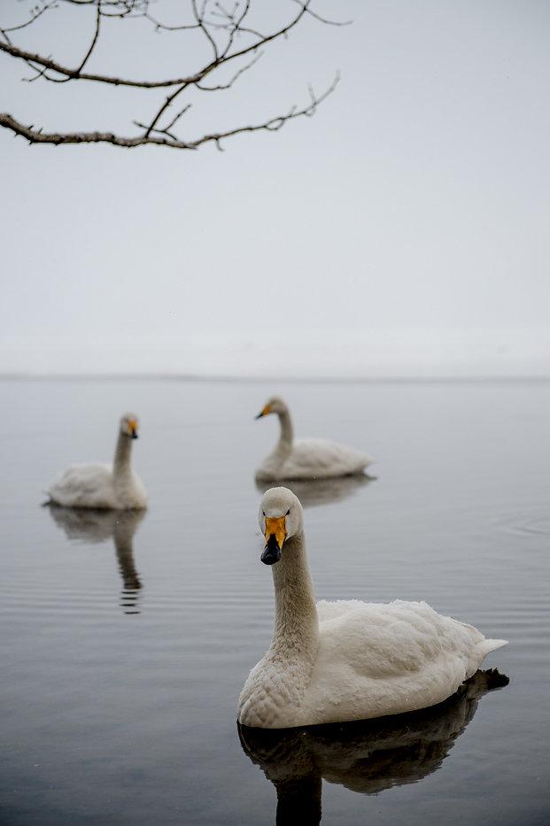 Hokkaido-09.jpg