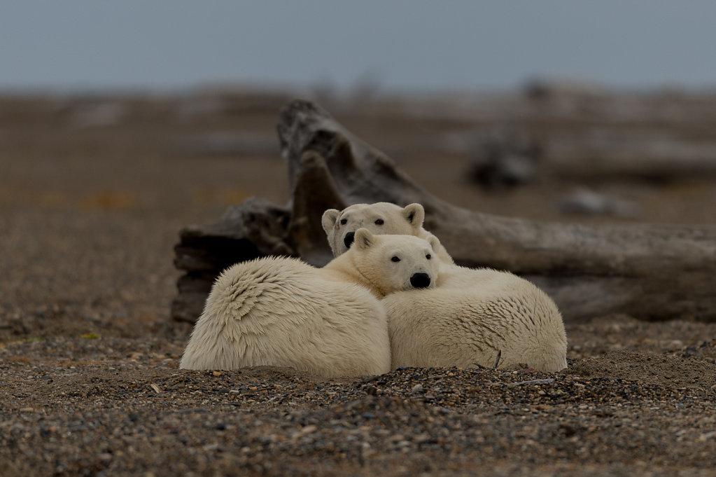 Alaska16-04.jpg