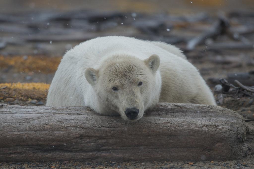 Alaska16-035.jpg