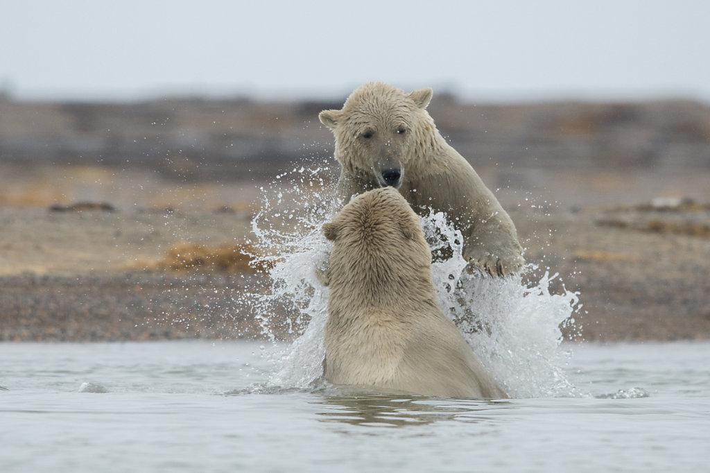 Alaska16-037.jpg