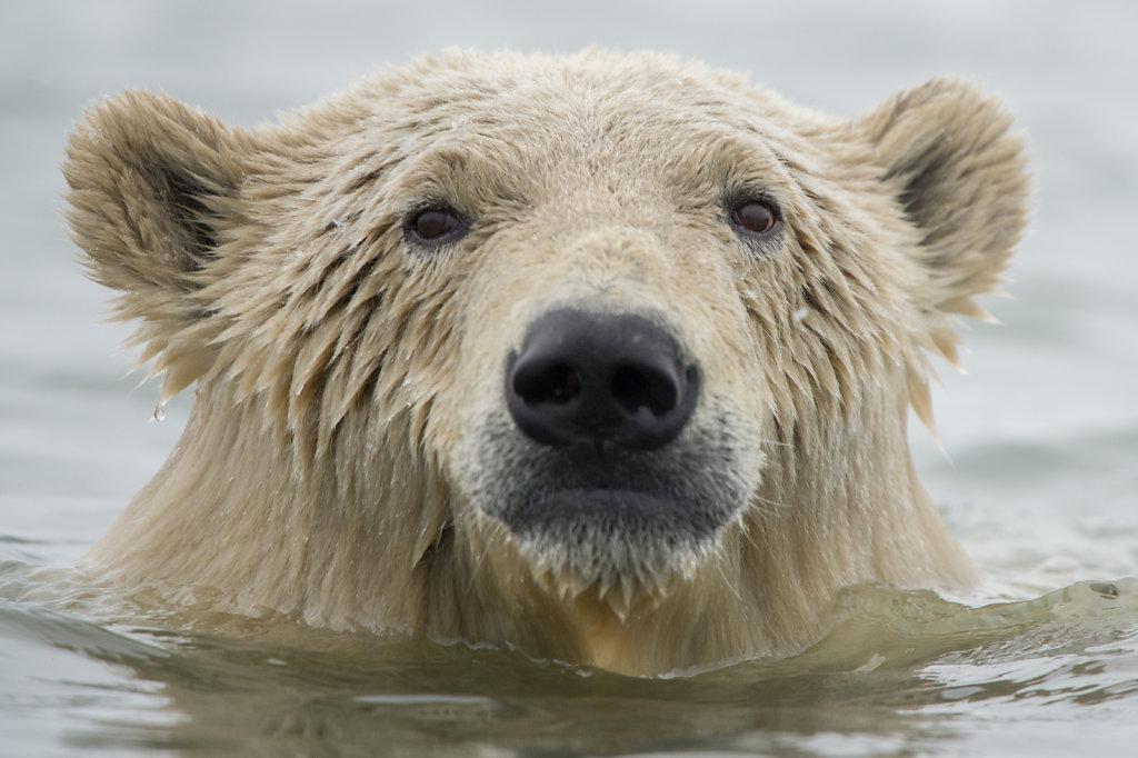 Alaska16-050.jpg
