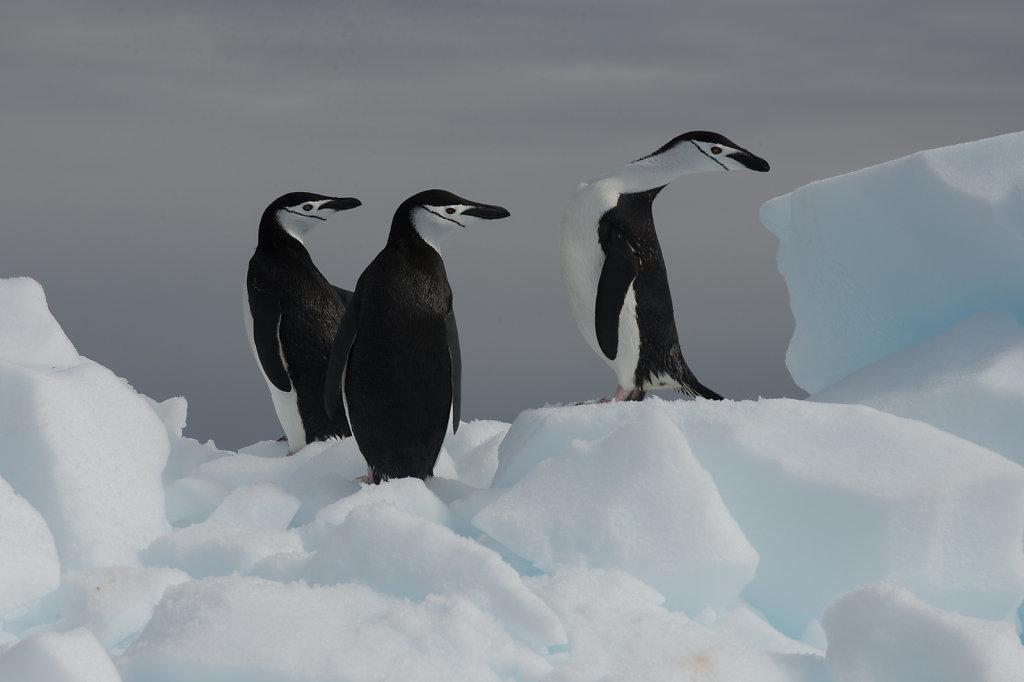 Antarctica54.jpg