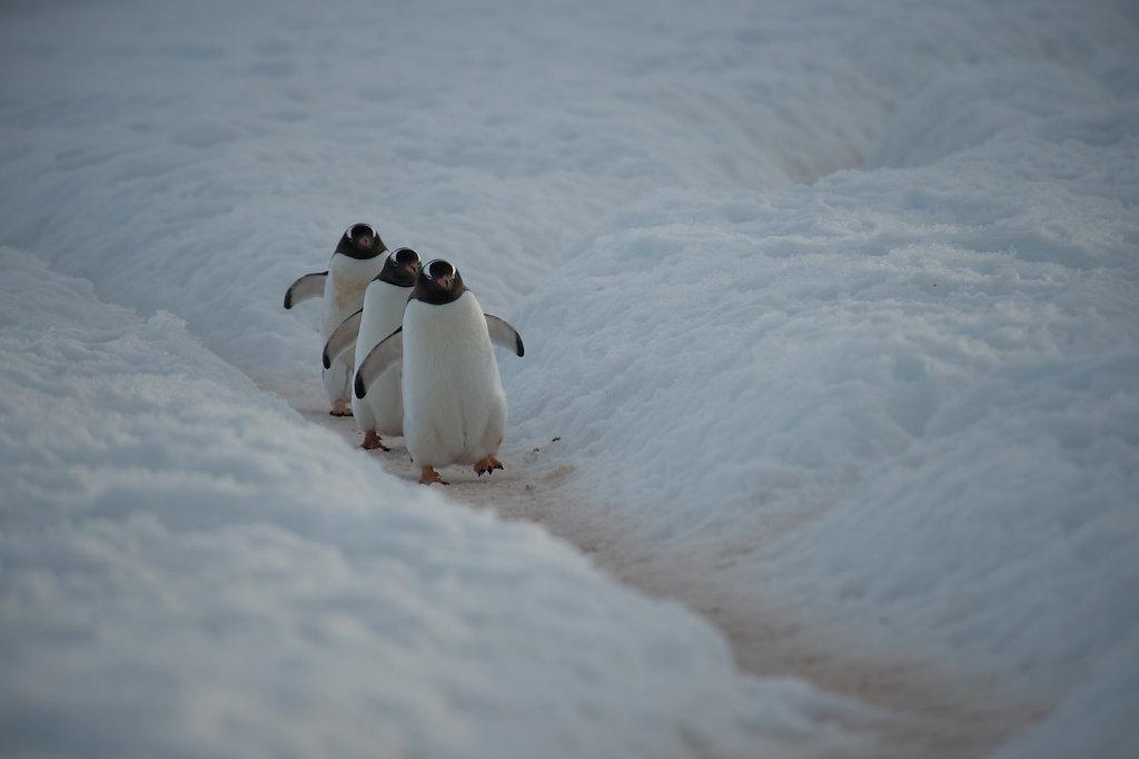 Antarctica58.jpg