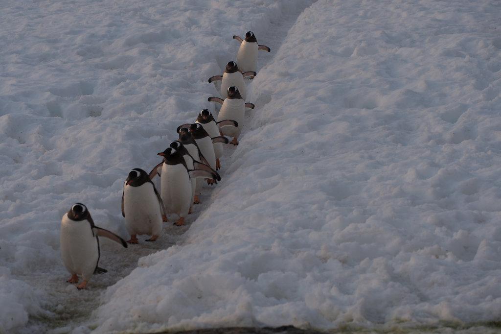 Antarctica63.jpg