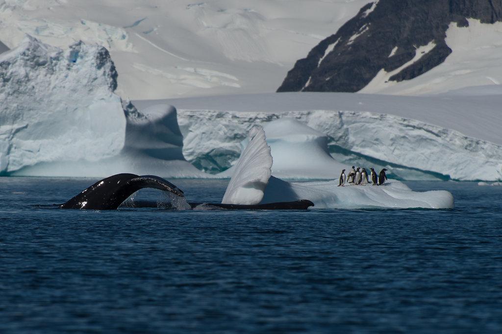 Antarctica07.jpg