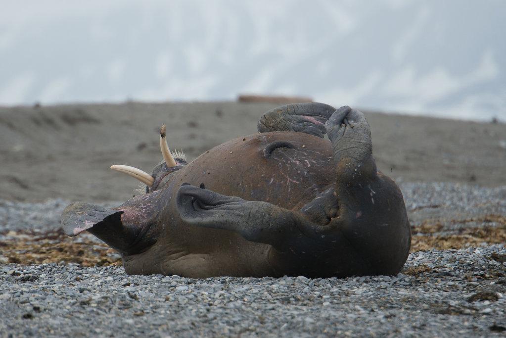 Spitsbergen14-01.jpg