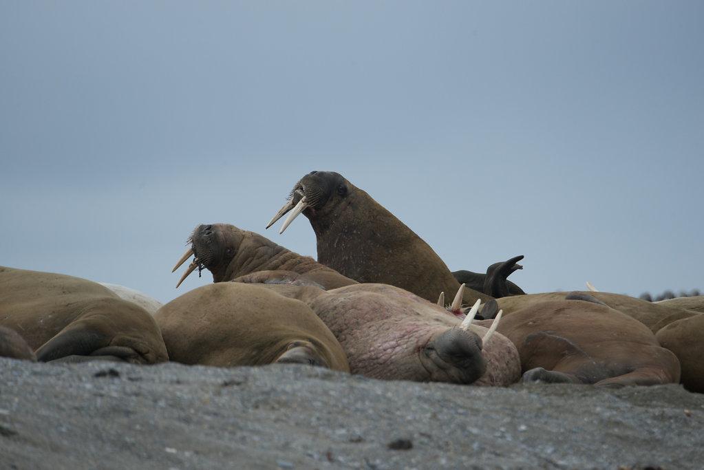 Spitsbergen14-06.jpg