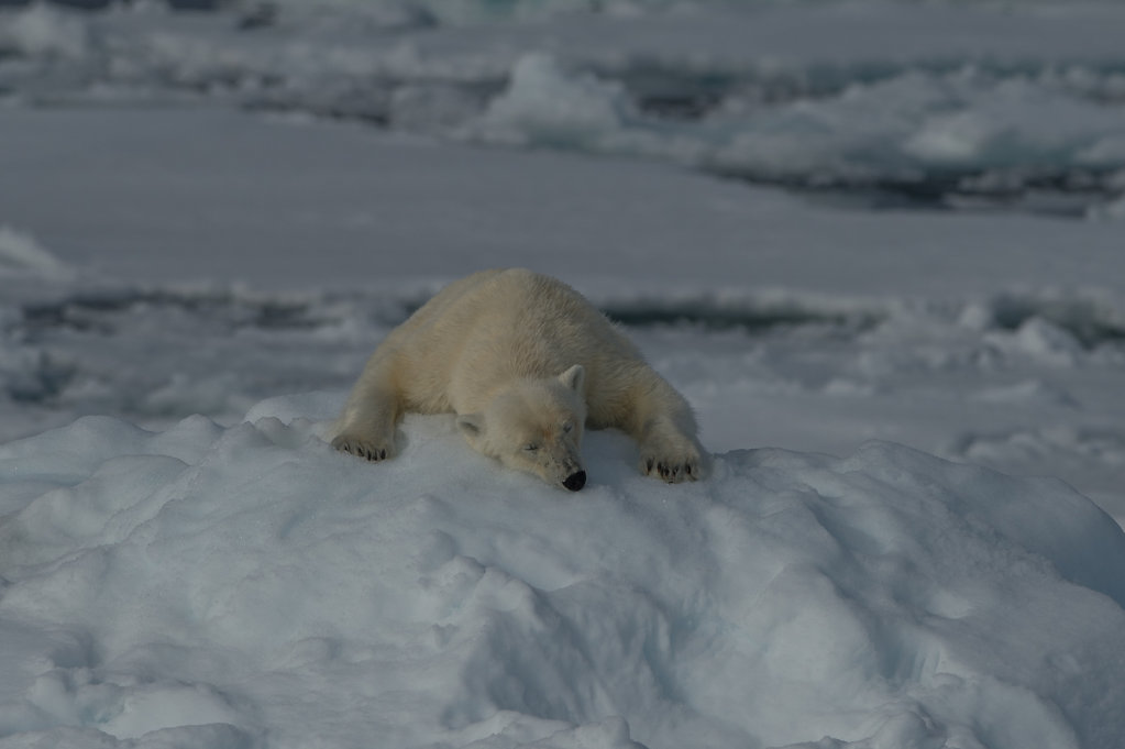 Spitsbergen14-09.jpg