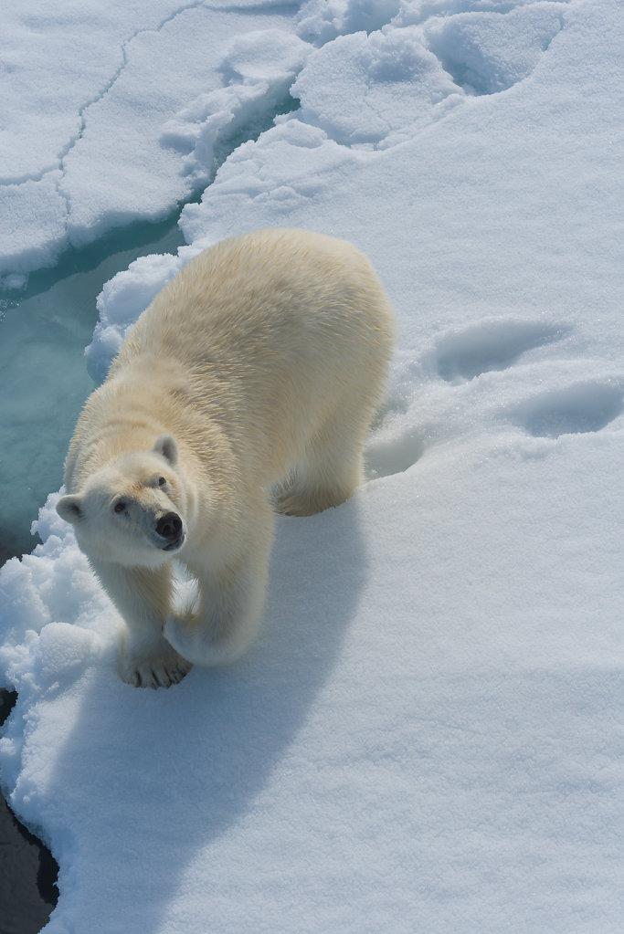 Spitsbergen14-29.jpg