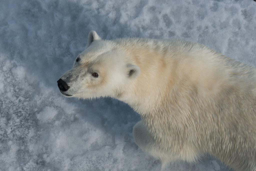 Spitsbergen14-31.jpg