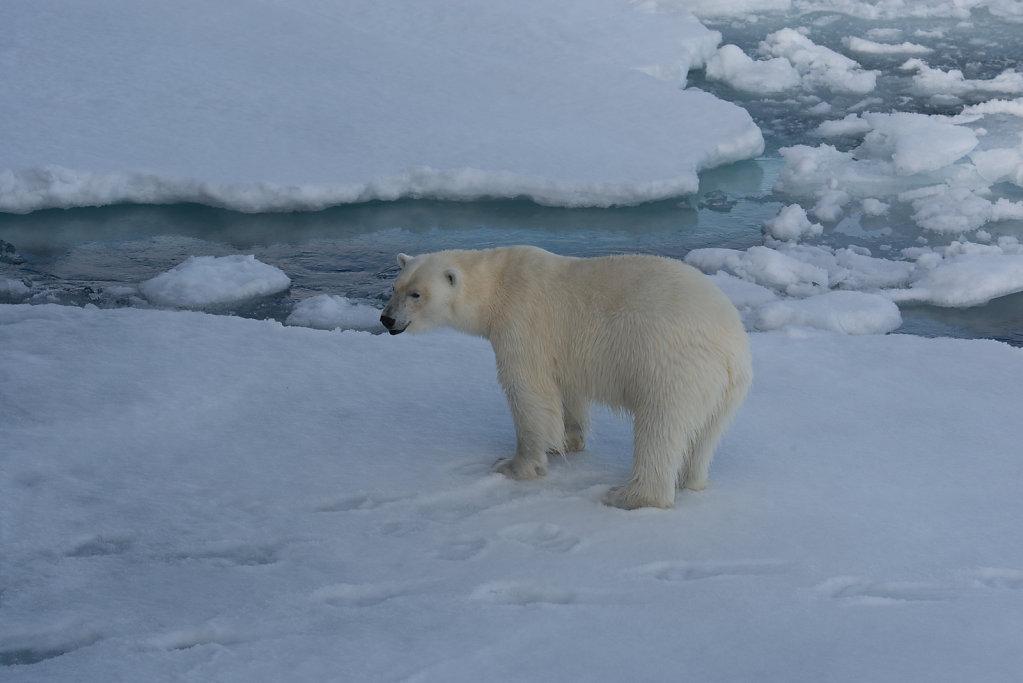 Spitsbergen14-32.jpg