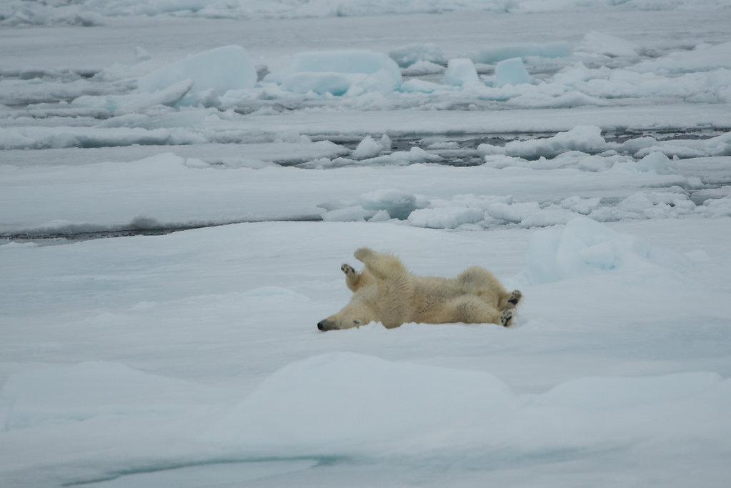 Spitsbergen14-60.jpg