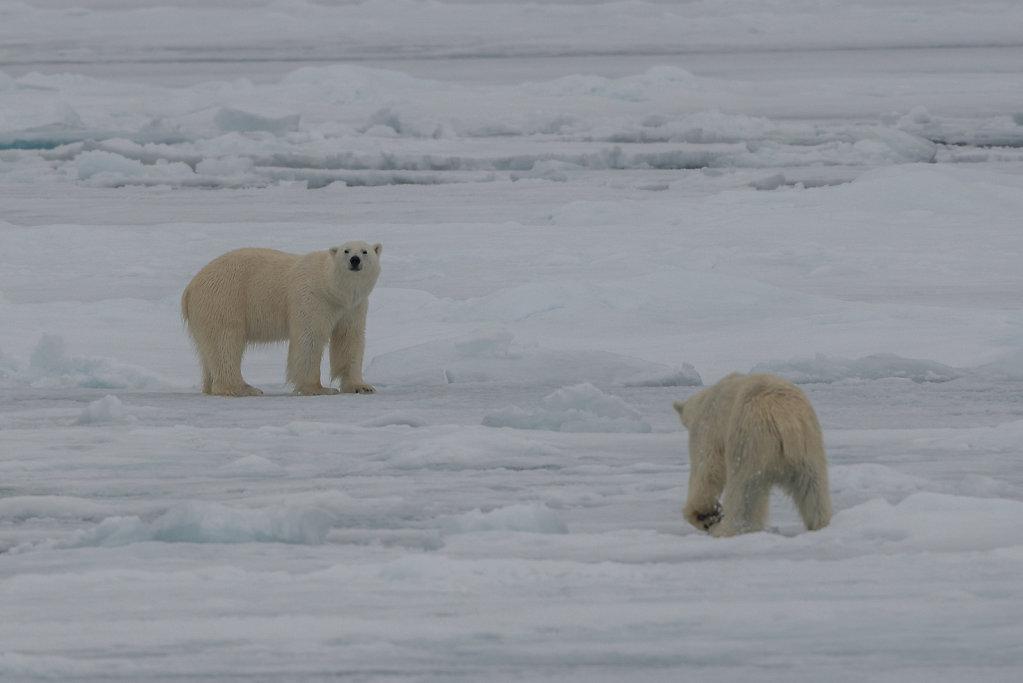 Spitsbergen14-64.jpg