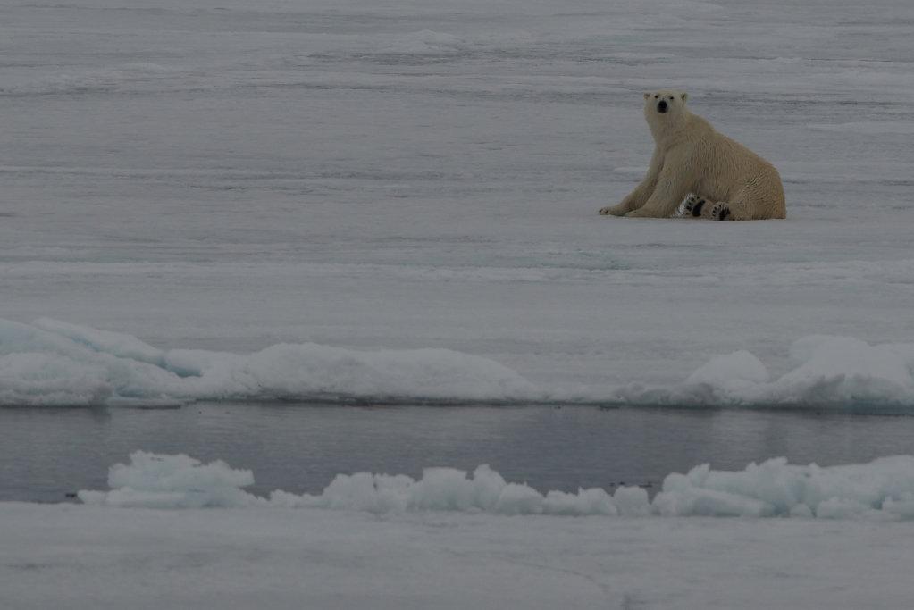 Spitsbergen14-65.jpg