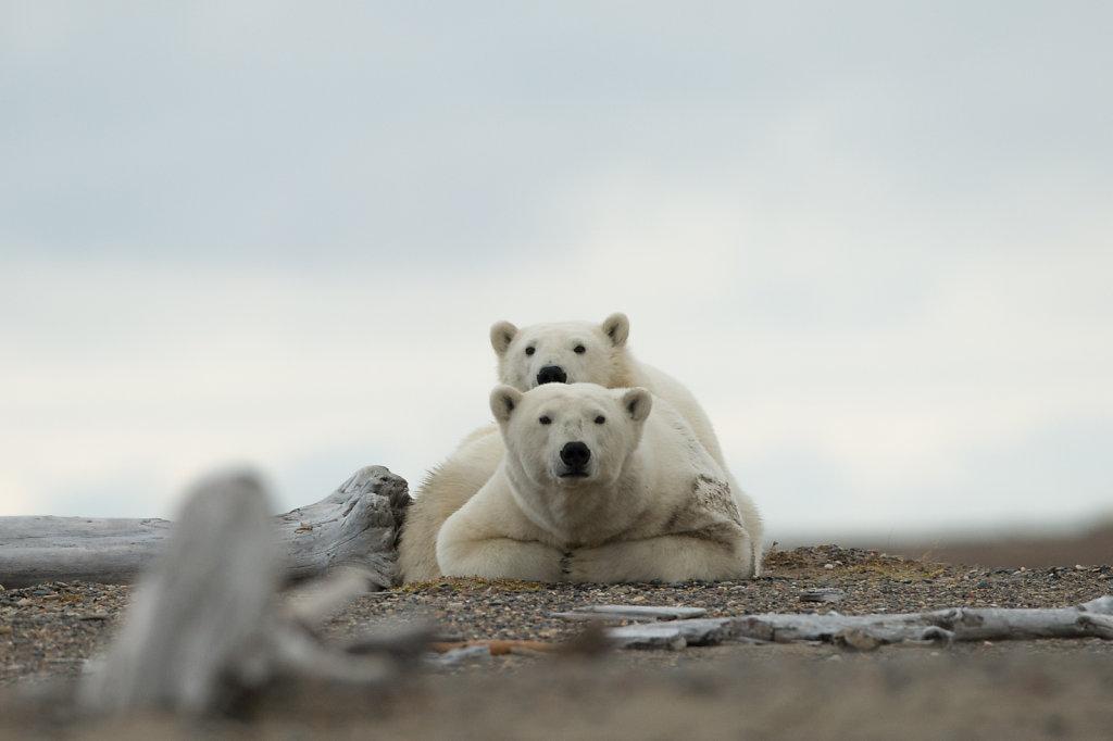 Alaska16-071.jpg